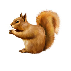 Red Squirrel, Sciurus Vulgaris, sitting eating
