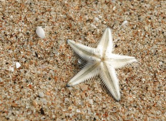 The Starfish on the Beach in Thailand