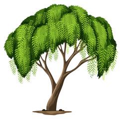 A Californian pepper tree