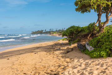 The beach in Kauai, Hawaii