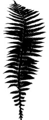 single black isolated fern leaf silhouette
