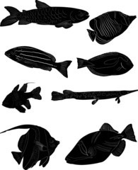 group of eight fish sketchs isolated on white