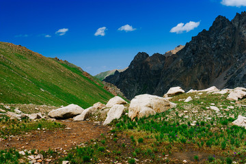 Beautiful view of alpine meadows