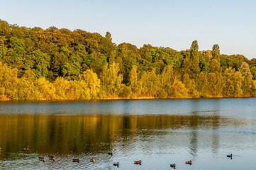 Köln - Fühlinger See - mit Enten