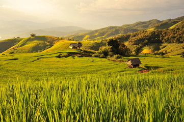 Rice Paddy Fields at Sunset
