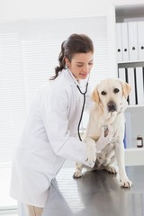 Happy veterinarian examining a cute dog with stethoscope