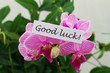 Good luck card with pink orchids