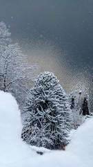 Schnee um den See