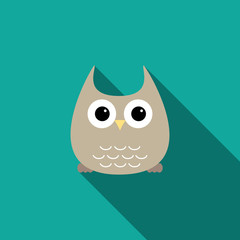 Owlet on green background