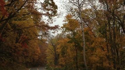 紅葉最盛期の観光道路を登る車窓映像