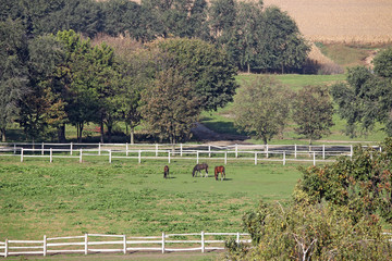 horses on pasture farmland landscape
