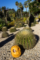 Halloween scary pumpkin on the cactuses backgroung