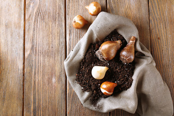 Flower bulbs and soil on sackcloth napkin on wooden background