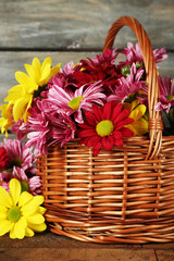 Beautiful chrysanthemum in basket on wooden background