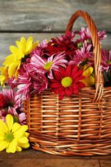 Beautiful chrysanthemum in basket on wooden background