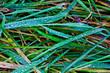 canvas print picture - Gras