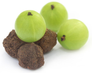 Amla fruits - dried and green