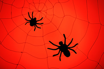Spiders on web. Halloween decoration concept