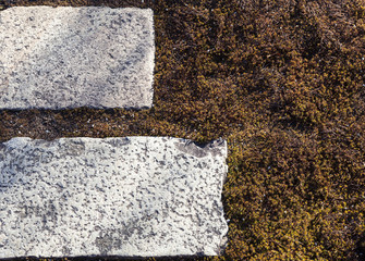 Green moss with stone tiles