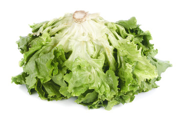 Green lettuce isolated on white