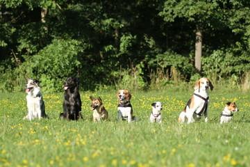 Sieben Hunde machen Sitz