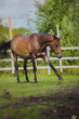 horse, horse's neck, the horse in the summer, horse chestnut - 71890989