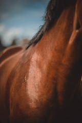 horse, horse's neck, the horse in the summer, horse chestnut