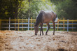 horse, horse's neck, the horse in the summer, horse chestnut - 71891154
