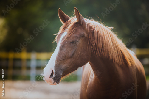horse, horse's neck, the horse in the summer, horse chestnut - 71891110