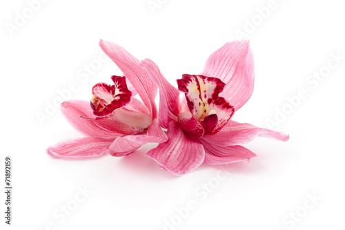 Fotobehang Orchidee Pink Cymbidium orchids