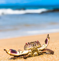 Cute Animal Seafood Posing