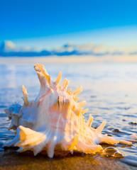 Beautiful Shell Evening Shore