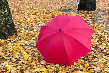 Red umbrella on yellow leaves