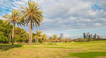 Lawn in the park of modern Tel Aviv