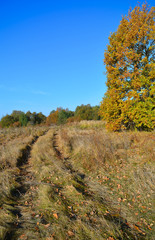 Dirt road in a meadow in autumn