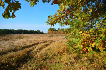 View autumn meadow and a dirt road through the branches of a tre