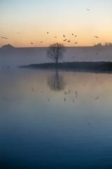 Single tree on tiny island