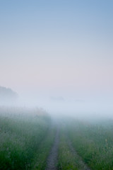 Path into heavy fog background