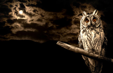 owl and full moon halloween abstract background