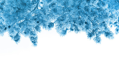 Tree in frost isolated on white background