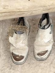 Zapatillas de deporte viejas colgadas con un nido dentro
