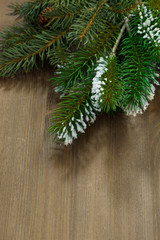 wooden background with fir branches, vertical