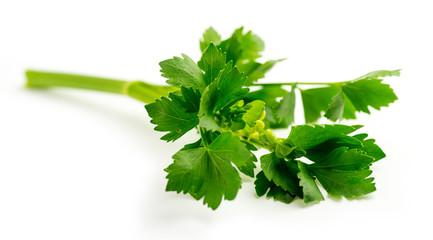 Fresh green celery leaves on stalk