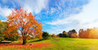 Autumn, fall landscape. Tree with colorful leaves. Panorama - 71904777
