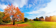 """Постер, картина, фотообои """"Autumn, fall landscape. Tree with colorful leaves. Panorama"""""""