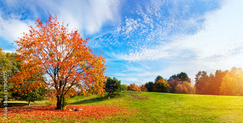 Tuinposter Platteland Autumn, fall landscape. Tree with colorful leaves. Panorama