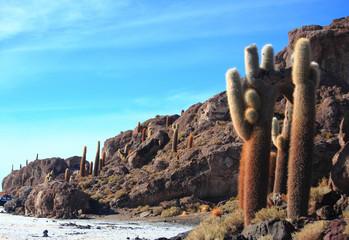 the cacti on the Isla Incahuasi