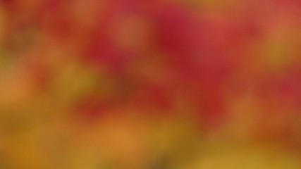 風に揺れる紅葉にフォーカスイン_1