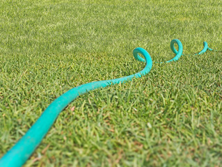 Curled rubber garden hose laying on grass,low angle view