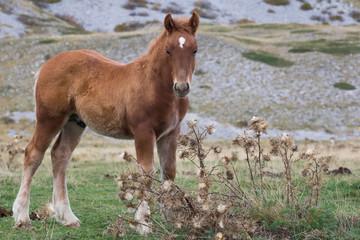 foal grazing
